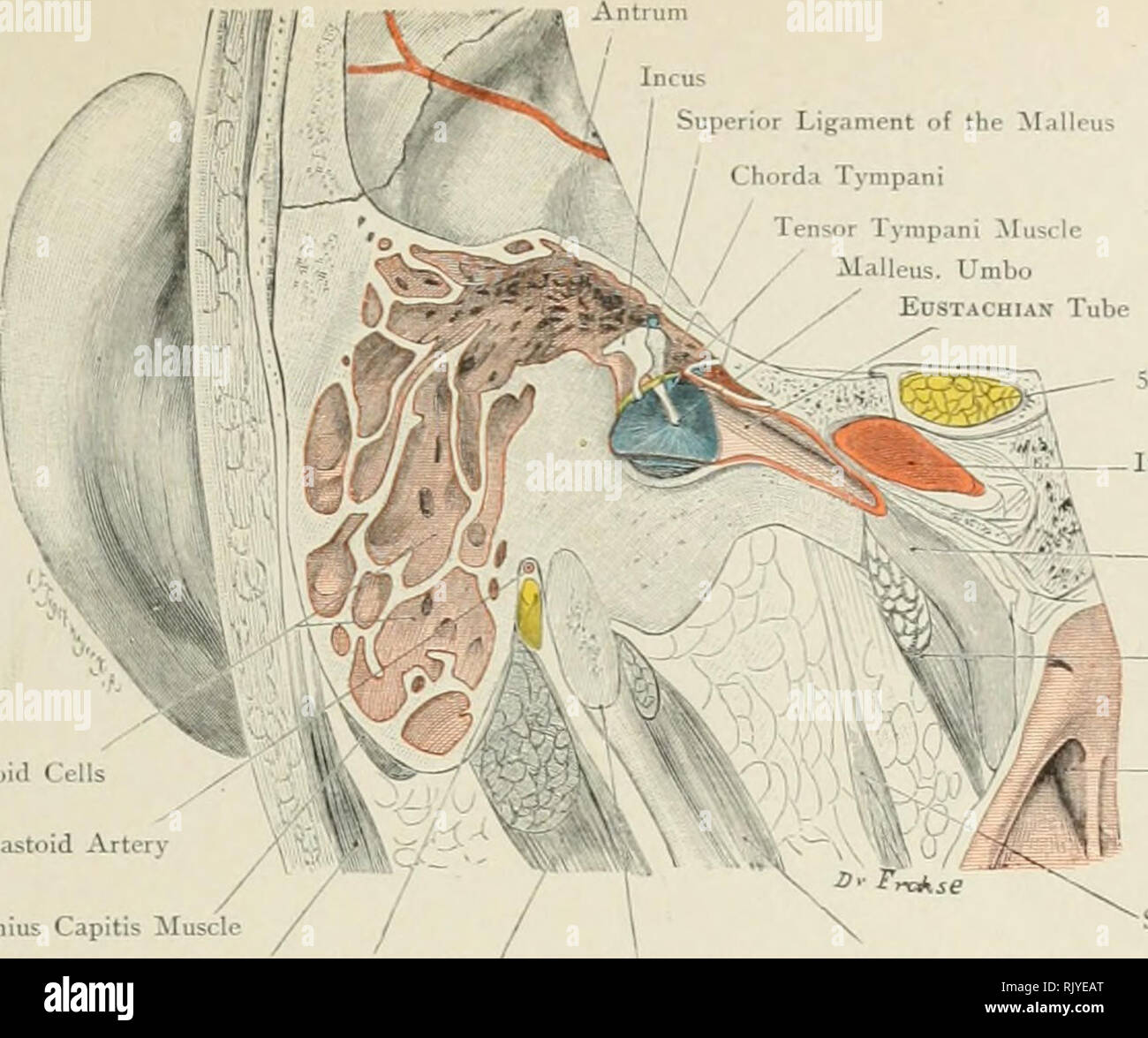 Atlas Of Applied Topographical Human Anatomy For Students And