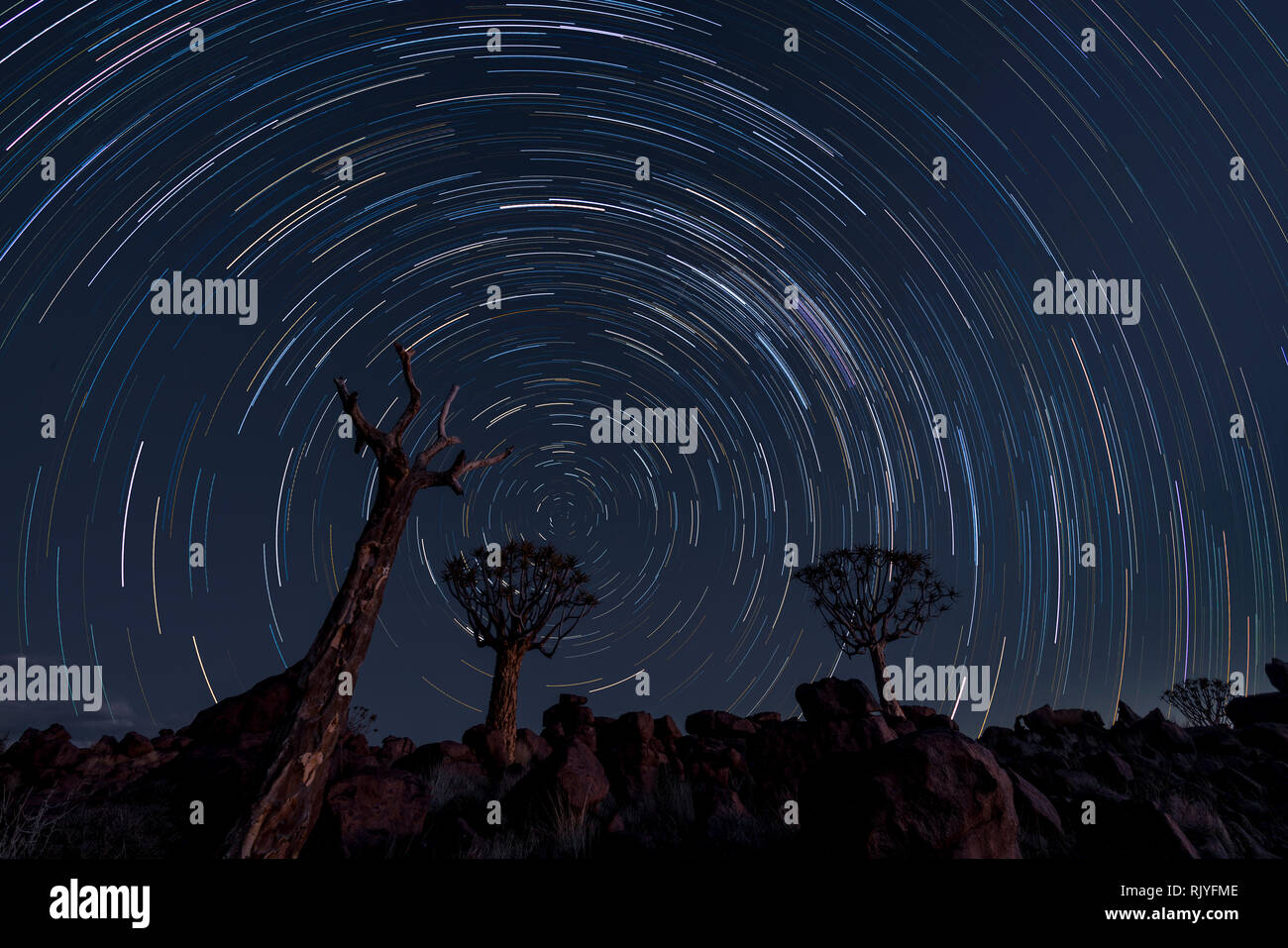 Star trails circle over quiver trees in Namibia - Stock Image