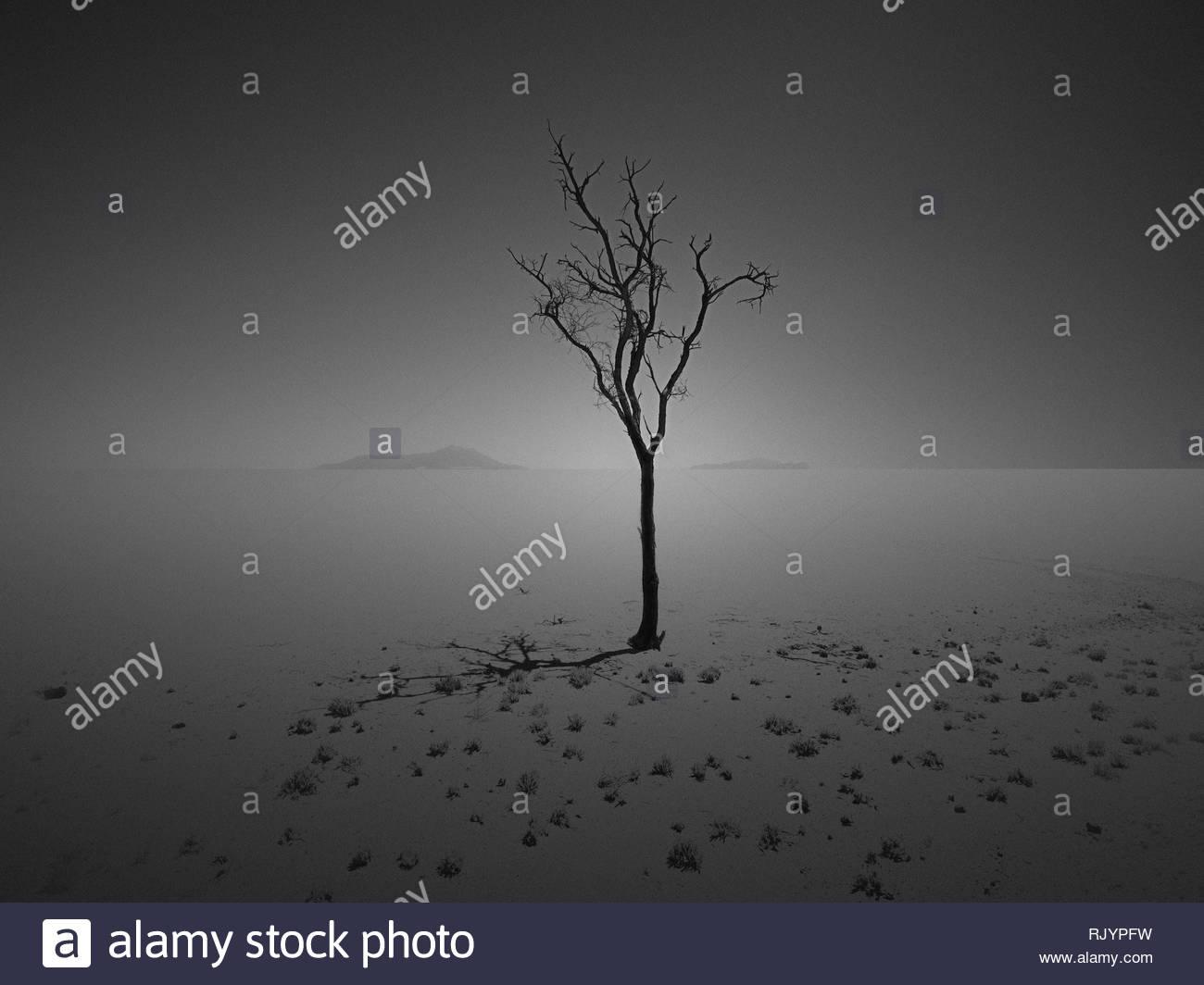 lonely tree - Stock Image