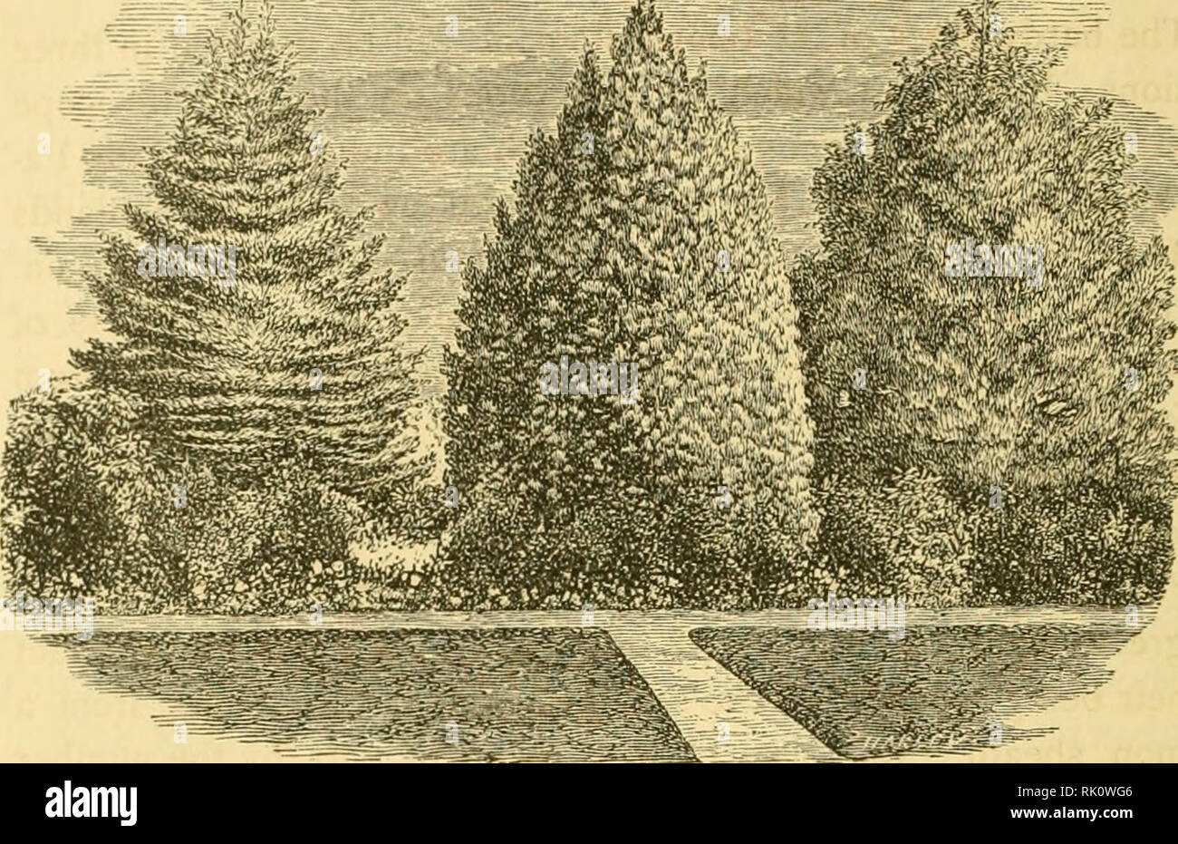 The Art Of Beautifying Suburban Home Grounds Of Small Extent Landscape Gardening Trees Chapter V Evergreen Trees And Shrubs Aving In The Chapter On The Characteristics Of Trees Pages 294 And