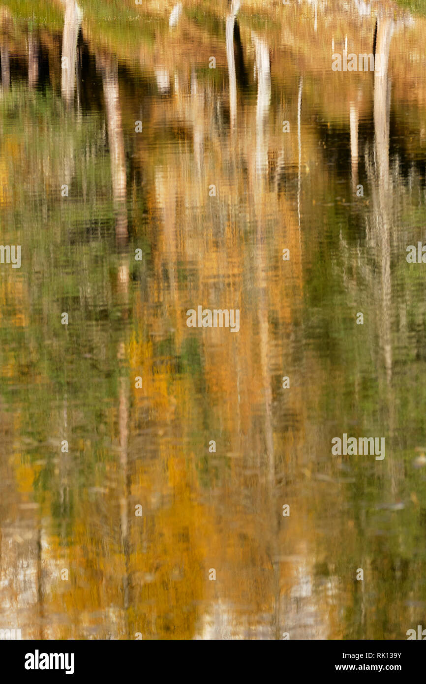 Trees and autumn colours reflected in Lago Antorno, near Misurina, Dolomites, Veneto, Italy - Stock Image