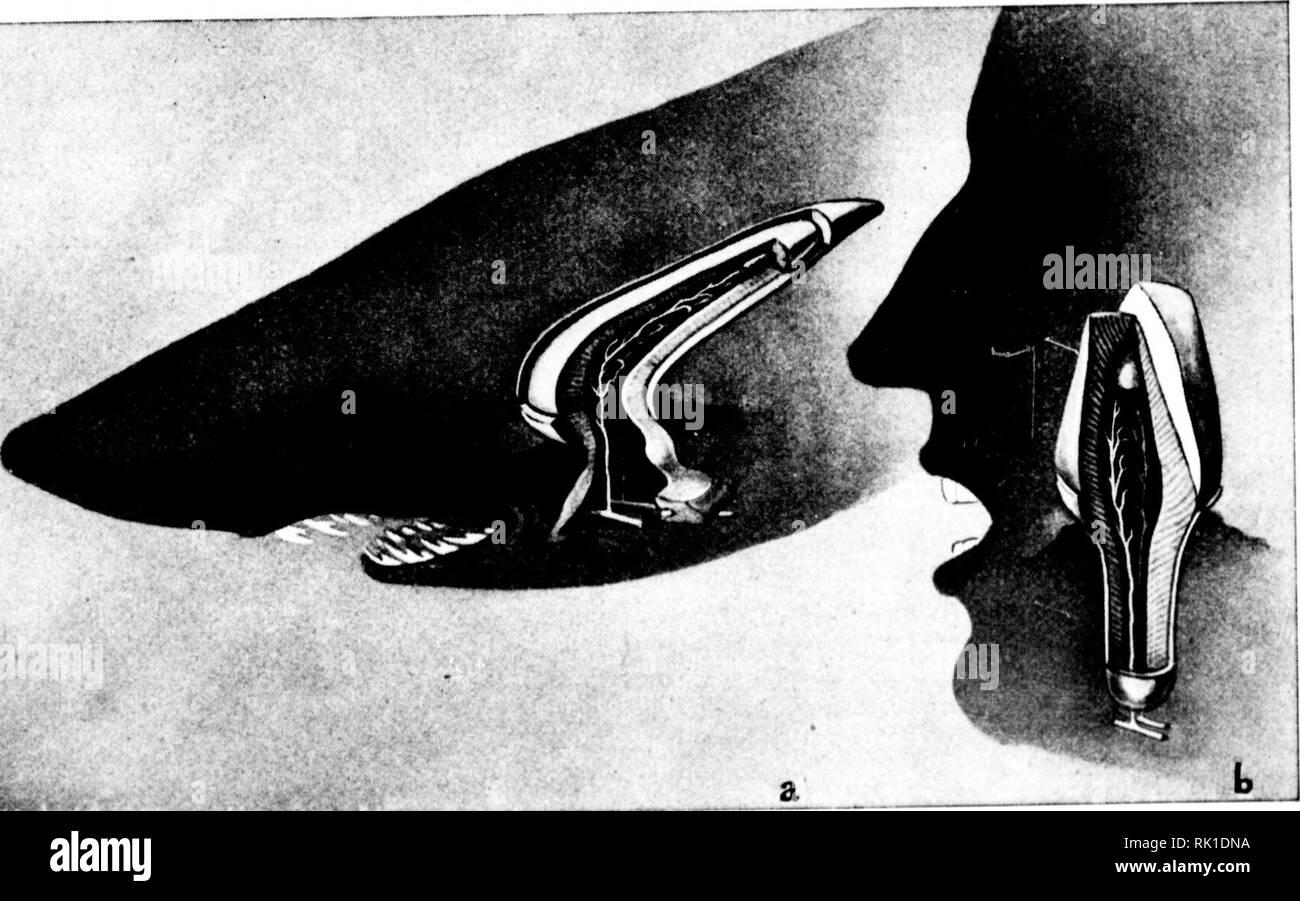 . Arthur and Fritz Kahn Collection 1889-1932. Kahn, Fritz 1888-1968; Kahn, Arthur David 1850-1928; Natural history illustrators; Natural history. k. I fi * I ^ '^ r' Der Menschenzahn (b) ist ein Nachkomme der Fischschuppen und stimmt noch heute bis in alle Einzelheiten seines Baus mH den Höckerschuppen der primitiven Fische, -. ^. der Haijuche (a), übercw. Das Werk ist billig. obwohl es DM 43.-/ Fr. 44.70 kostet. Doch wer die 590 Seiten und die 386 Bilder gründlich studiert, braucht mindestens ein Jahr dazu. Verteilt man den Kaufpreis auf 365 Tage, so kommt man auf etwa 12 Pfennig / Rappen pro Stock Photo