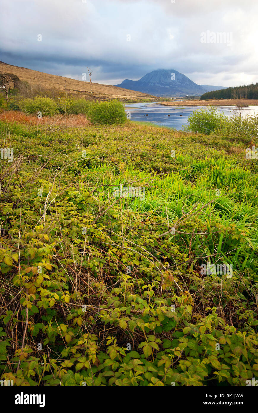 Clady river and Mount Errigal semi covered by clouds, County Donegal, Ireland - Stock Image
