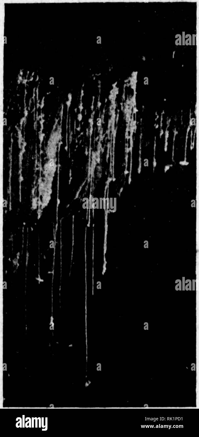 . Arthur and Fritz Kahn Collection 1889-1932. Kahn, Fritz 1888-1968; Kahn, Arthur David 1850-1928; Natural history illustrators; Natural history. .4/>fe. Ä. DfT Darhebrl Usdum, der Berg Sodoms, ein i km breiter, 11 km Inrnjer und 180 m hoher Snhherg am Ufer d''s Toten Meeres. läßt. Der Gesamteindruck ist zunächst luehrfacb schattiertes Braun, das in dunklen TIn en den Zugang der verborgenen Schlucht andeutet. Umherginge ins Violett, Sepiahraun oder in mehr rötlichen Nuancen beleben gewissermaßen die 5 bis lo m breiten La- gen der sich vertikal zerteilenden Sandsteinfelsen. Reicher noch die  - Stock Image