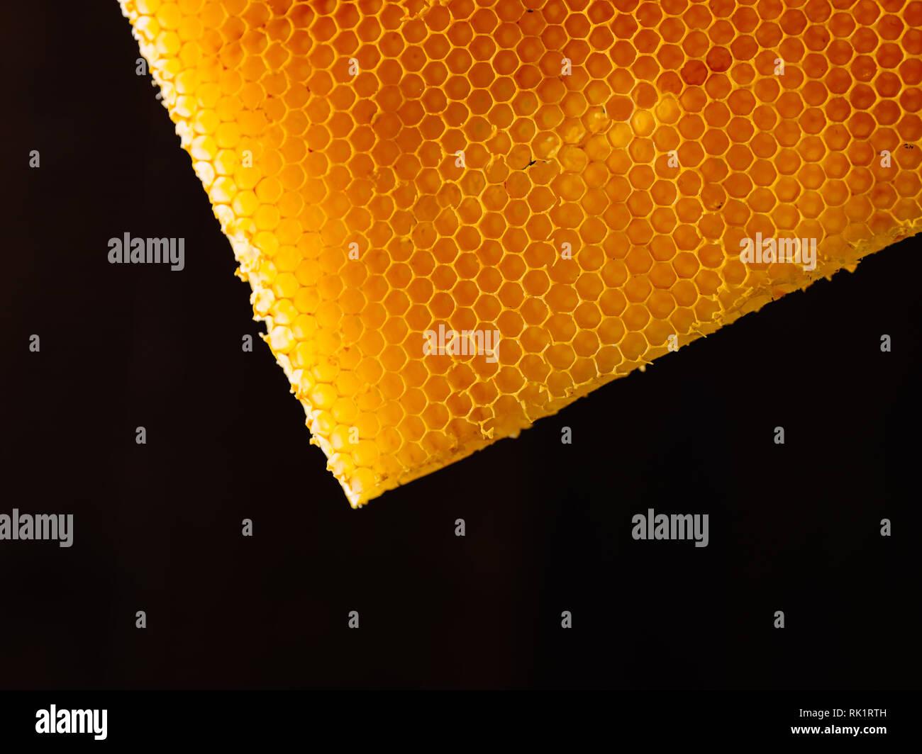 Bee honeycomb close up of isolated on black background - Stock Image