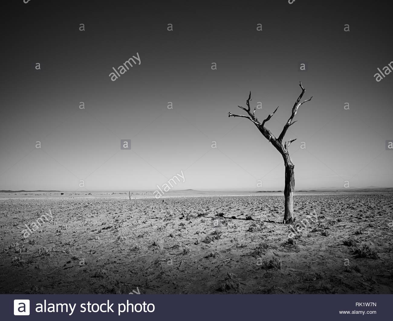tree alone in the desert - Stock Image