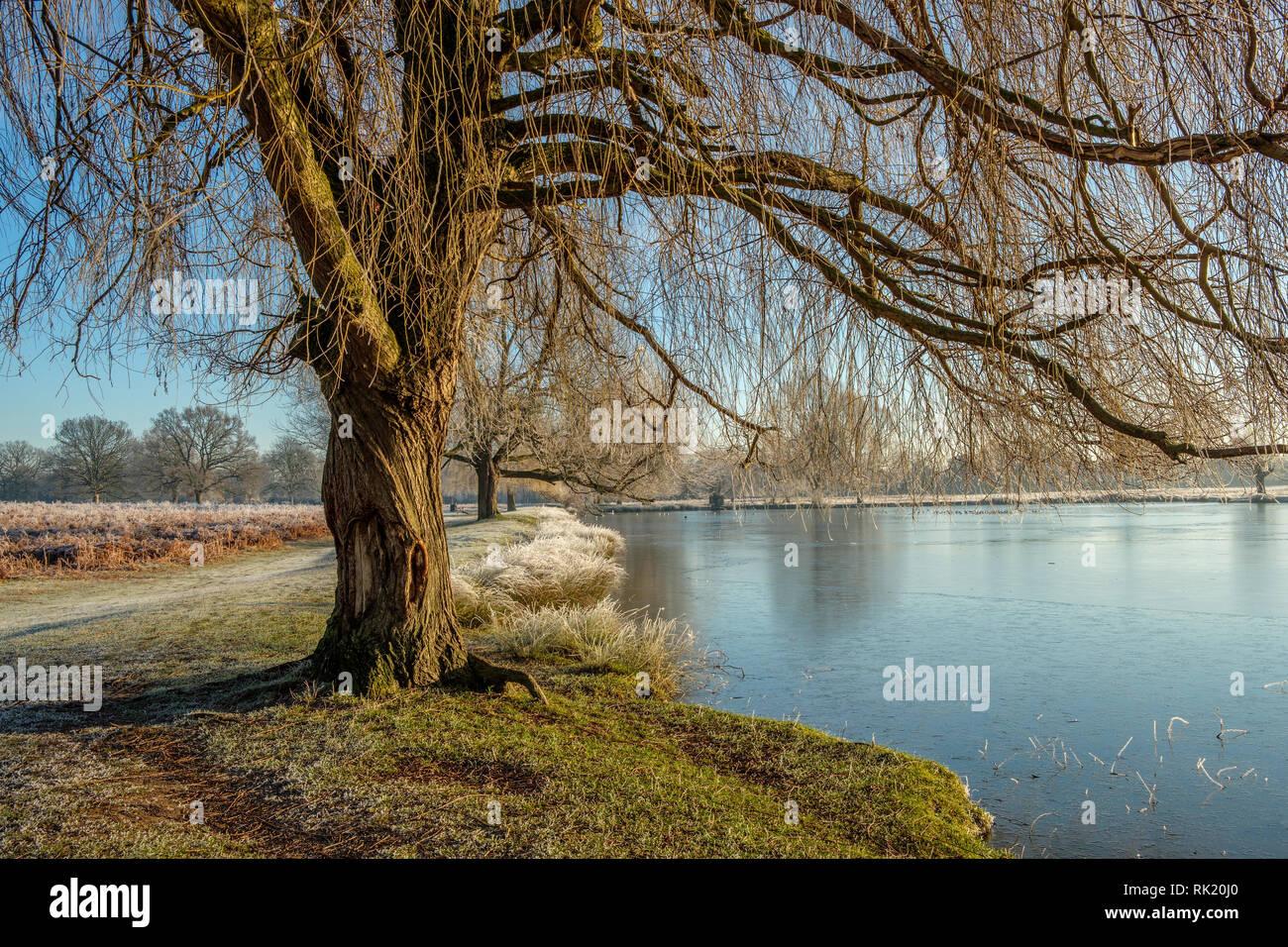 Leg of Mutton Pond Bushy Park Hampton London England - Stock Image