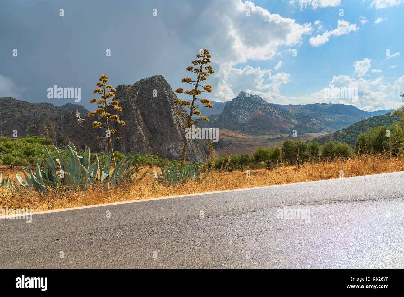 Road Ruta de los Pueblos Blancos towards the village of Montejaque, Serrania de Ronda, Malaga province, Andalusia, Spain - Stock Image