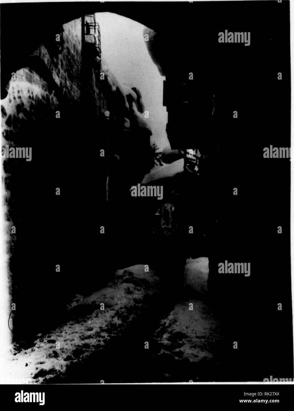 """. Arthur and Fritz Kahn Collection 1889-1932. Kahn, Fritz 1888-1968; Kahn, Arthur David 1850-1928; Natural history illustrators; Natural history. J.  Der """"betraöhtliche Kl iinaiint er schied zw Jerusalem iind Tel Aviv kommt in den beiden £fiigÃñRK Photographien zum Ausdruck. Die Schnee= aufnähme der Via dolorasa von Jerusalem ist in der z^v-eiten VYoche des Fehr > aufgenommen, die Photographie eines Gartens in der XÃstenelDene bei Tel Aviv ist ^ Wochen später angefertigt worden die Prühlingsblumen stehen in vollem Flor. ^pie Bananenstauden freilich verraten, dass sie kein 1 eic Stock Photo"""