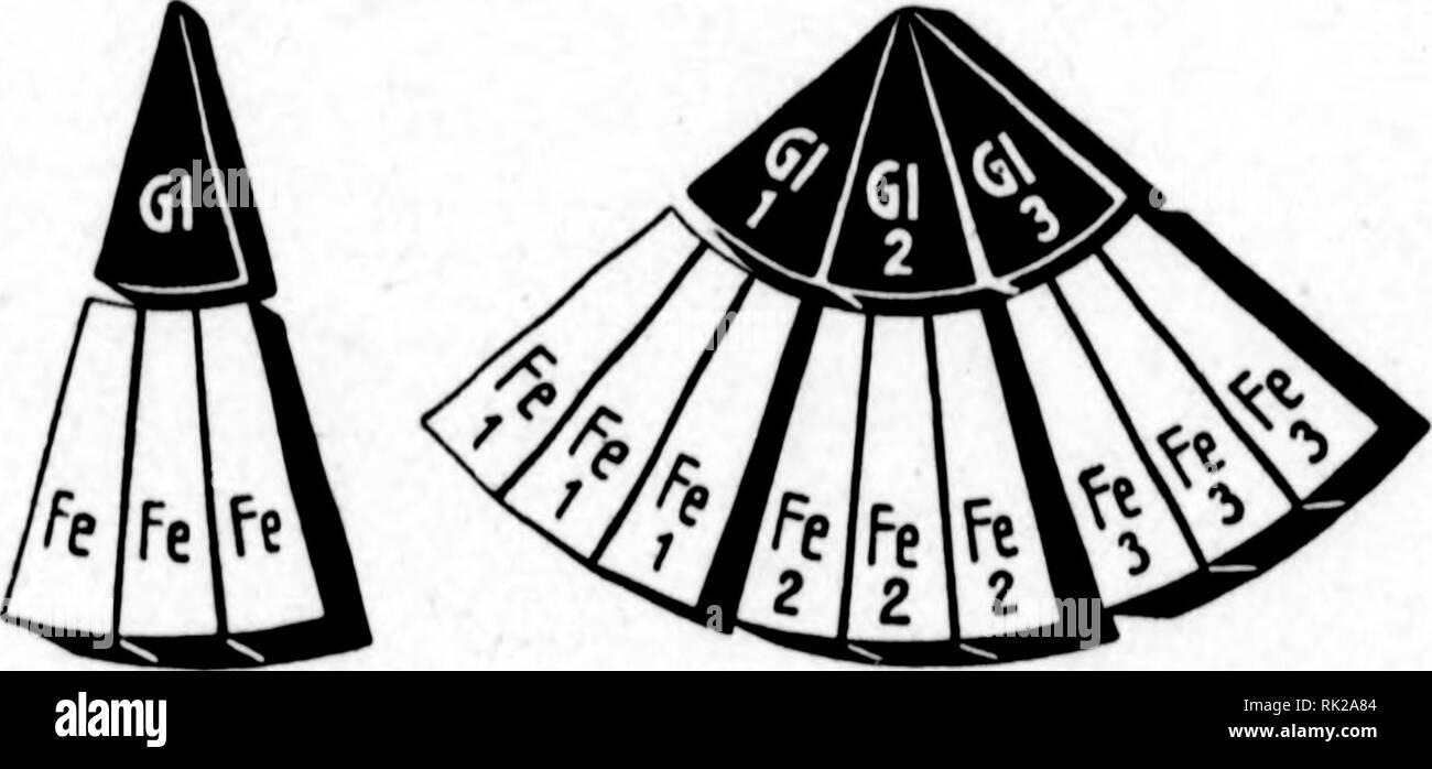 . Arthur and Fritz Kahn Collection 1889-1932. Kahn, Fritz 1888-1968; Kahn, Arthur David 1850-1928; Natural history illustrators; Natural history. Albumose Peprongruppe d Eiweiss Albumosengruppe StaD. 2. ©er Stufbau be§ eiiueifemoIeHilS au§ 2iniinoföure0ru>JDen. (1 b), 2 Smal55uder ba^ ^ejtrin (1 c), 2 ^ej- trine bk ^ierftörfe ÃJtt^fogen (Id), 2 ober metjrere ®It)fogenmotefü(e bie ^ftangenftörfe (le). Tlit Slu^na^me geringer S^raubenguder» mengen, bie voix mit Weintrauben, §onig ufm. genieÃen, finb alle So^Ien^i)brate ber menfc^* Ud)en ^a^rung Sot)Ien^i)brate t)ö^erer Orbnung unb  - Stock Image