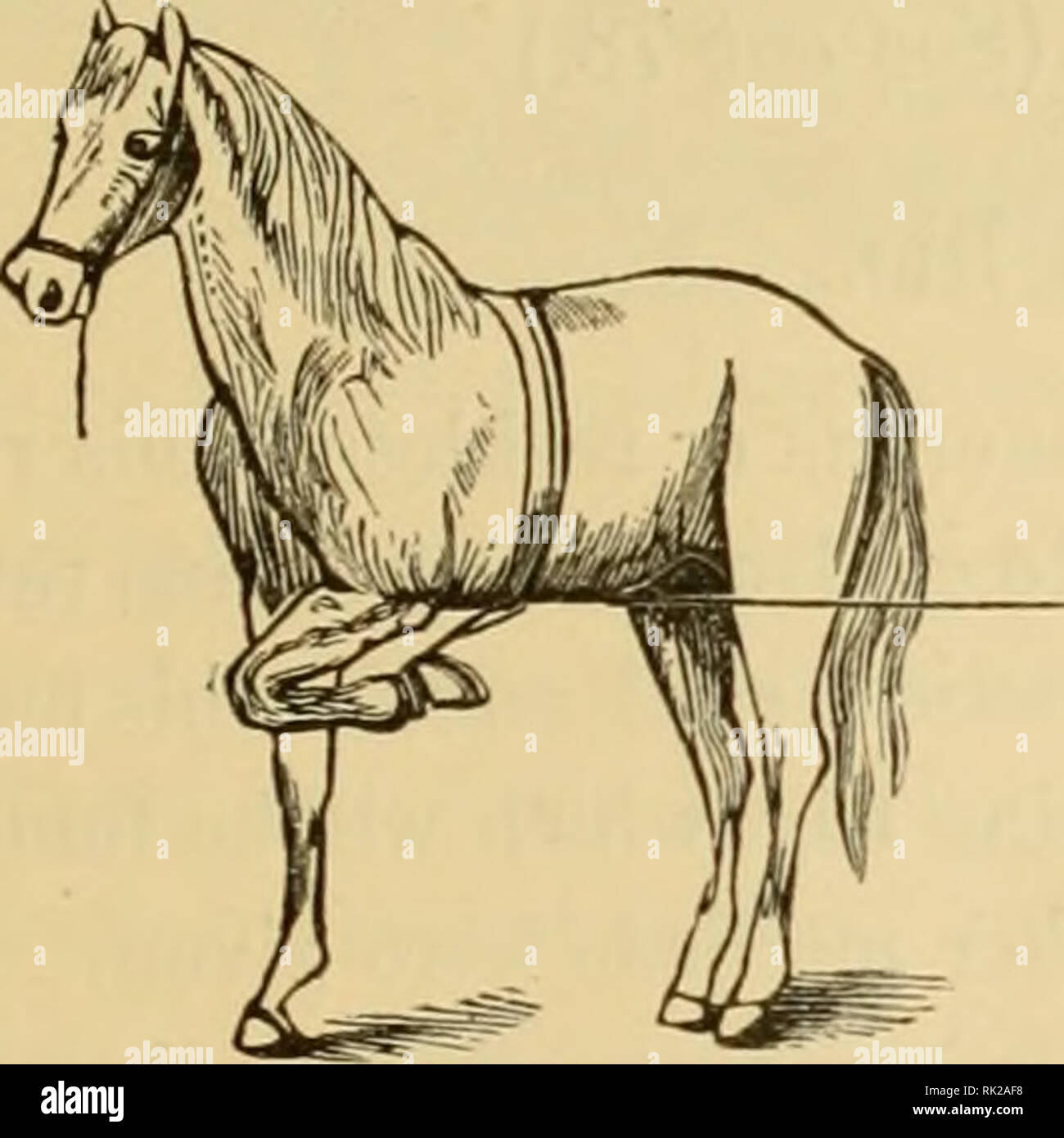 The Art Of Taming And Educating The Horse A System That Makes Easy And Practical The Subjection Of Wild And Vicious Horses The Simplest Most Humane And Effective