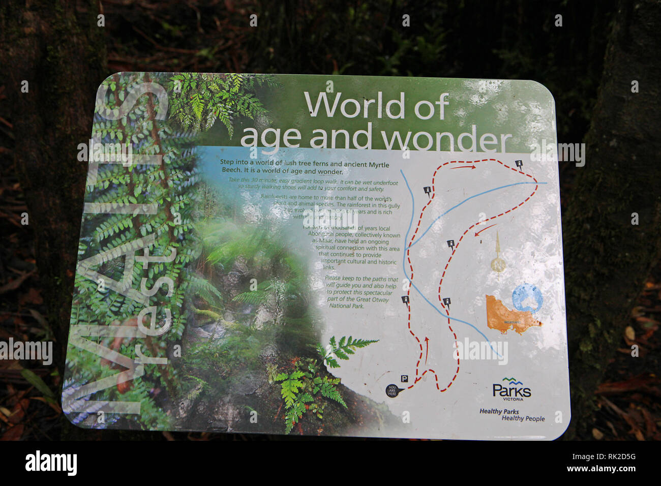 Visit Australia. Foliage, forests and pathways in some of Australia's rain forests.  boardwalk at Maits Rest rainforest in the Otways - Stock Image