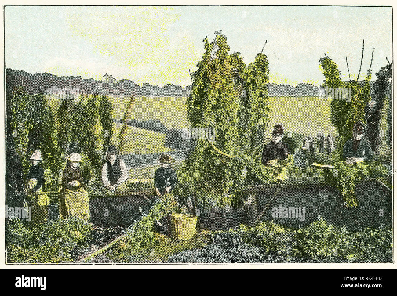 Coloured halftone of a family picking hops in Kent, early 1900s. - Stock Image