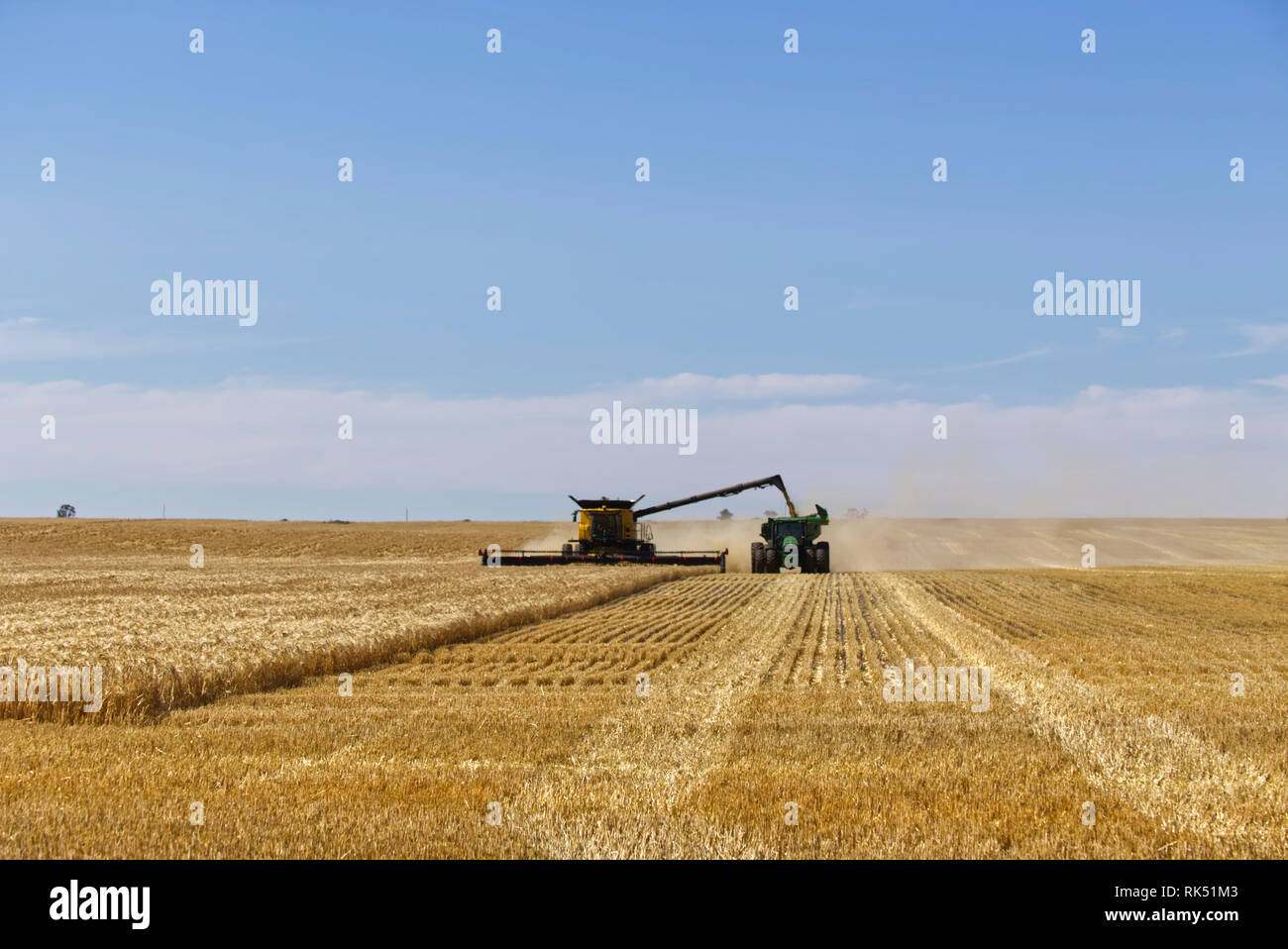 Barley harvesting with modern wide comb combine harvester (New Holland) and tractor bin chaser near Lock Eyre Peninsula South Australia - Stock Image