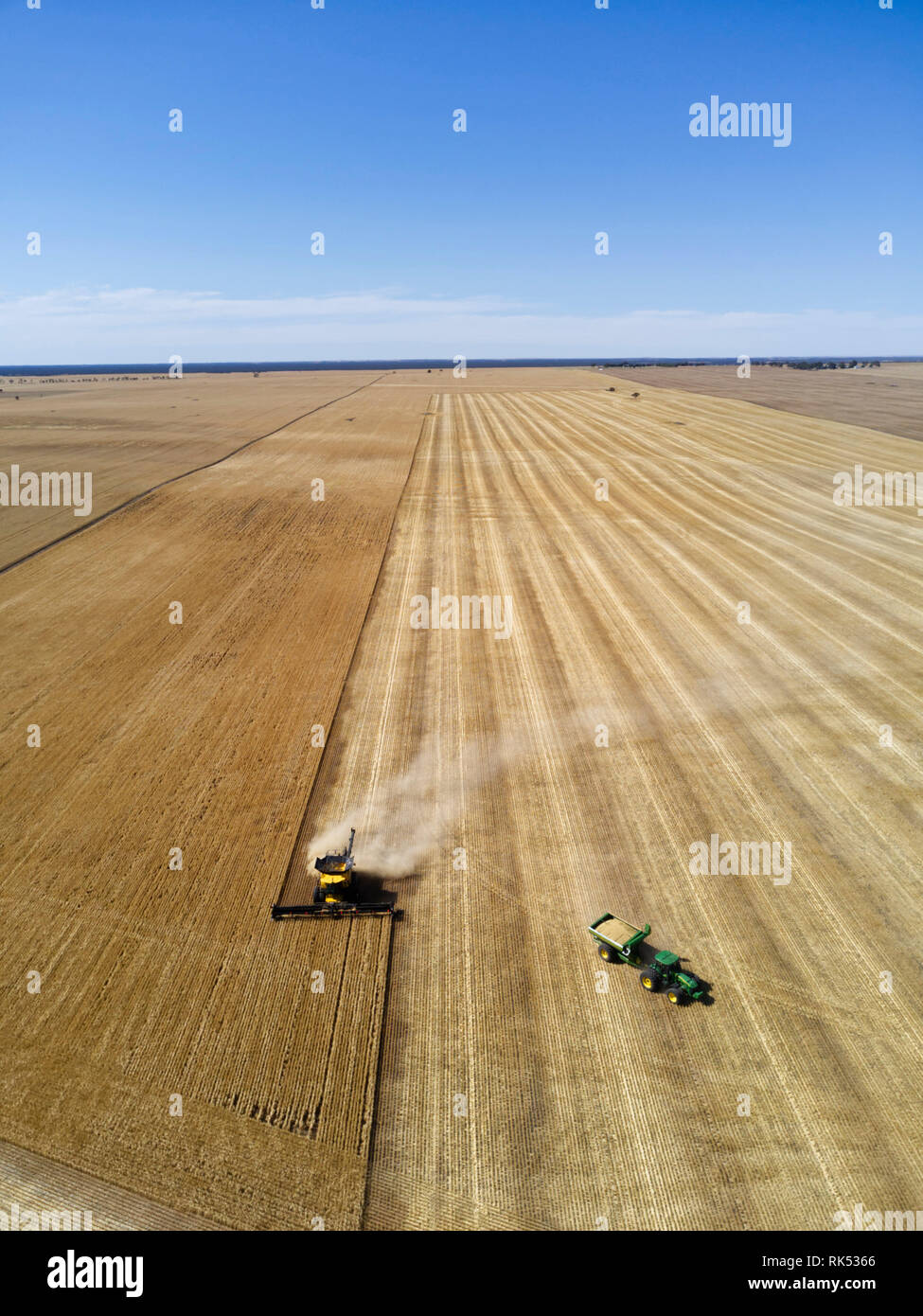 Aerial of barley harvesting with a modern wide comb combine harvester and tractor bin chaser near Lock Eyre Peninsula South Australia - Stock Image