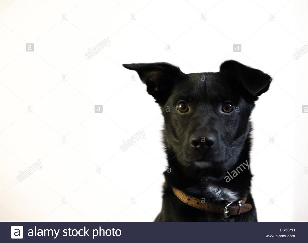 black dog on white wall - Stock Image
