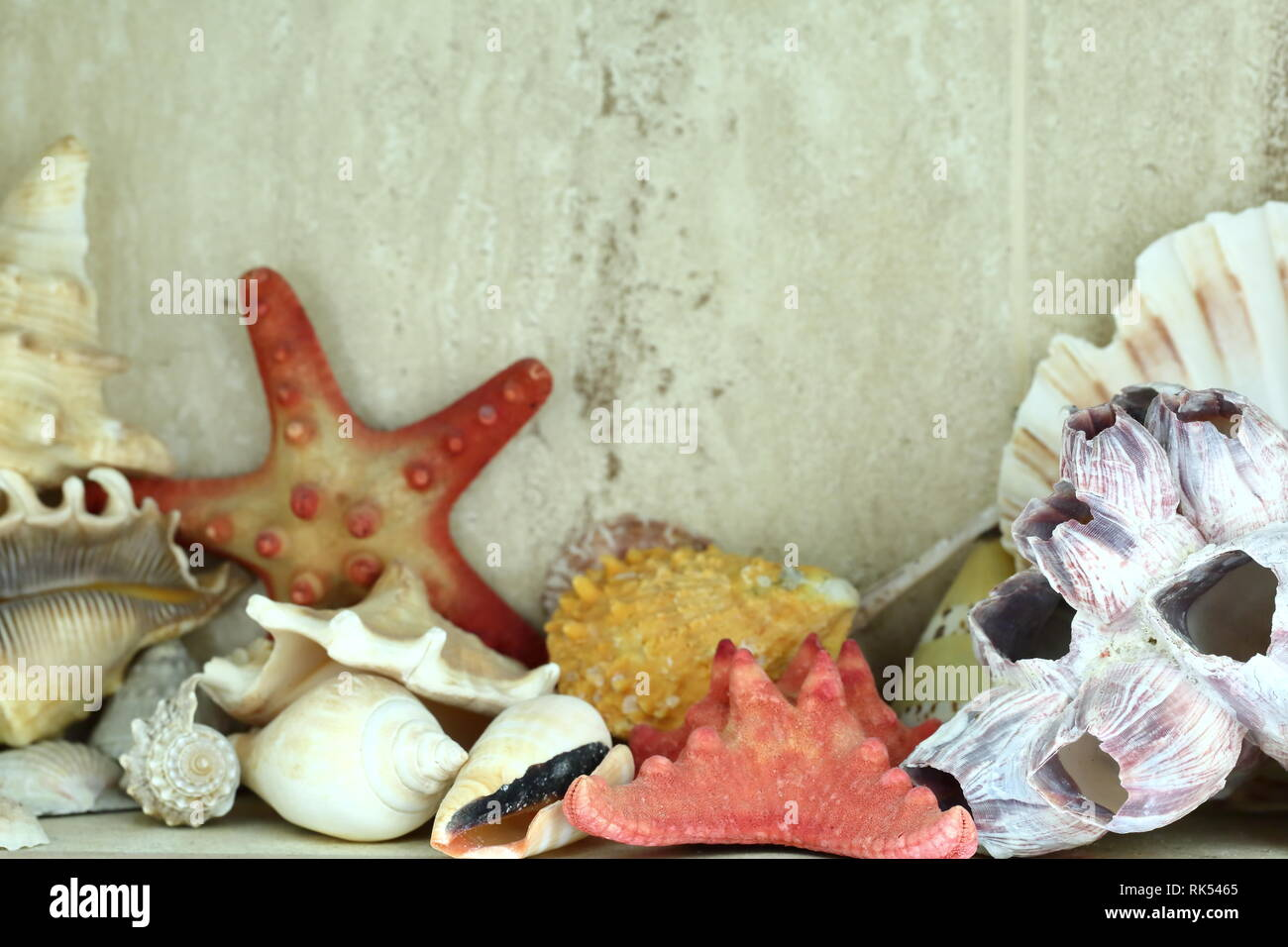 Shells of crustaceans in various colors and shapes as a bathroom or toilet decoration. - Stock Image