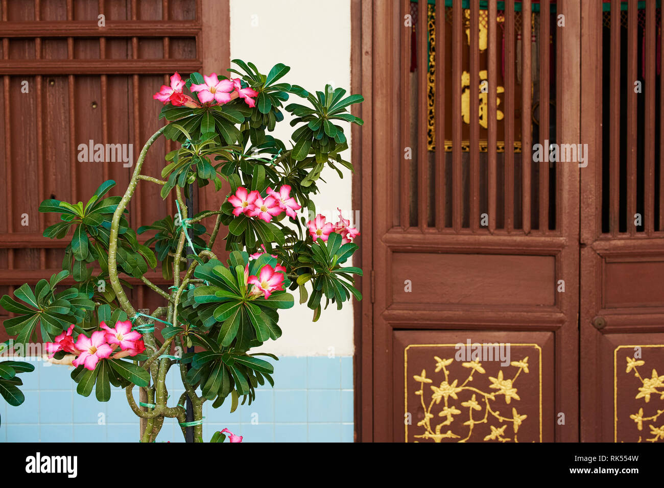 Oleander flowers and a Doorway with decorative carving on a old shophouse building on the street in George Town, Penang, Malaysia - Stock Image