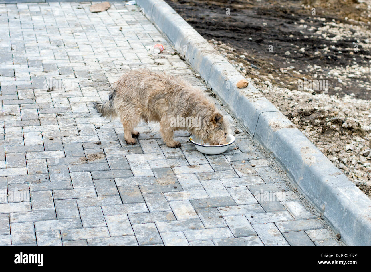 homeless dog eating on the sidewalk, theme charity and mercy, animal shelter, dog rescue, volunteer work - Stock Image