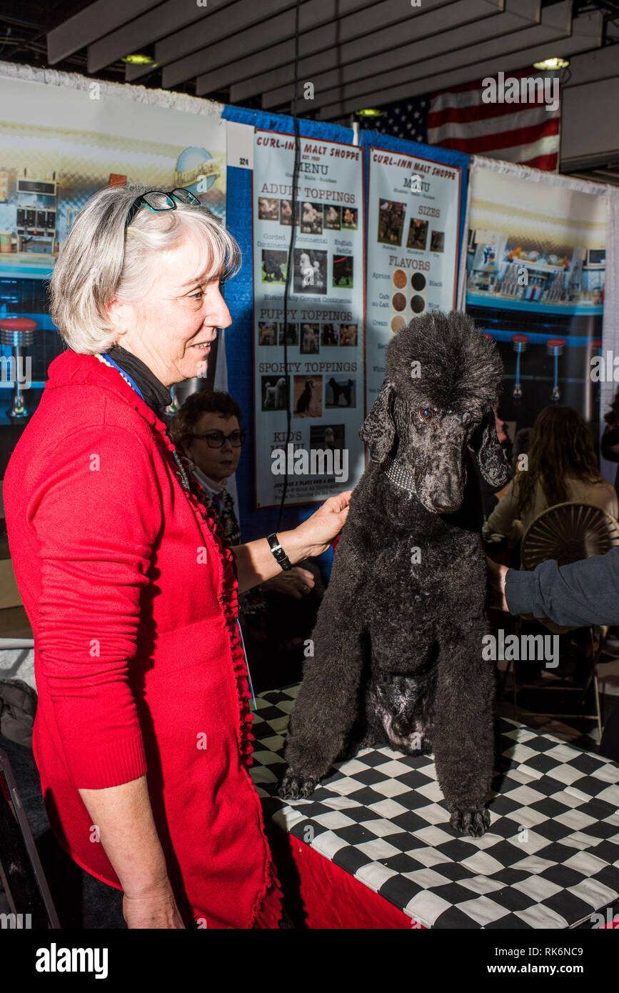 New York, USA. 9th Feb 2019.  Meet the Breeds, Westminster Dog Show, Pier 92, New York City. Credit: Valery Rizzo/Alamy Live News Stock Photo