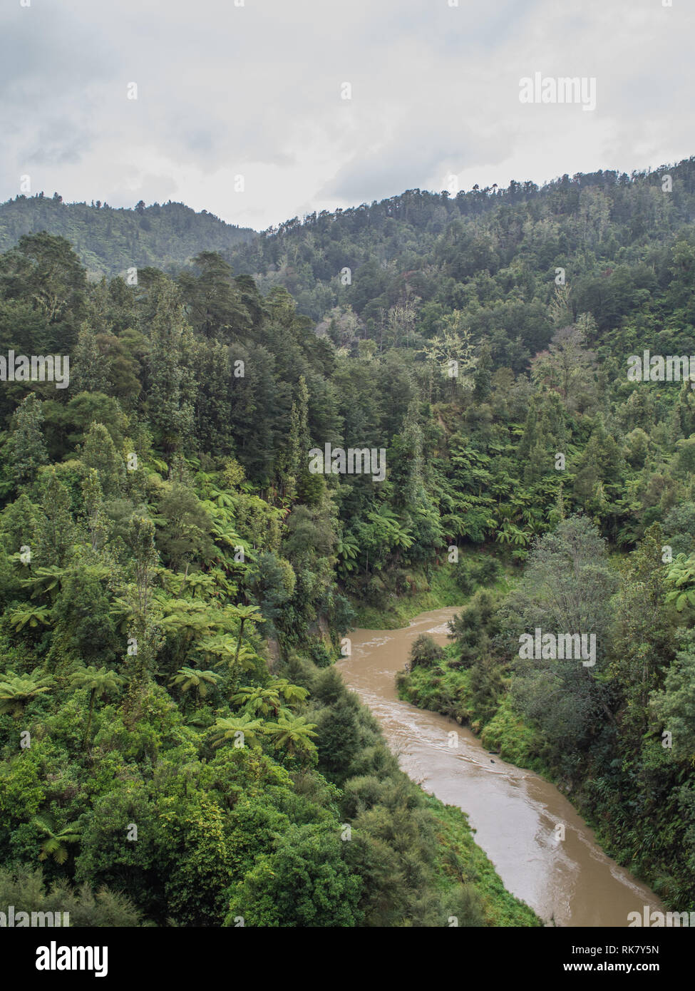 Ahuahu Stream in flood, flowing through native forest bush covered hills, an overcast day in autumn, Ahuahu Valley, Whanganui River, New Zealand Stock Photo
