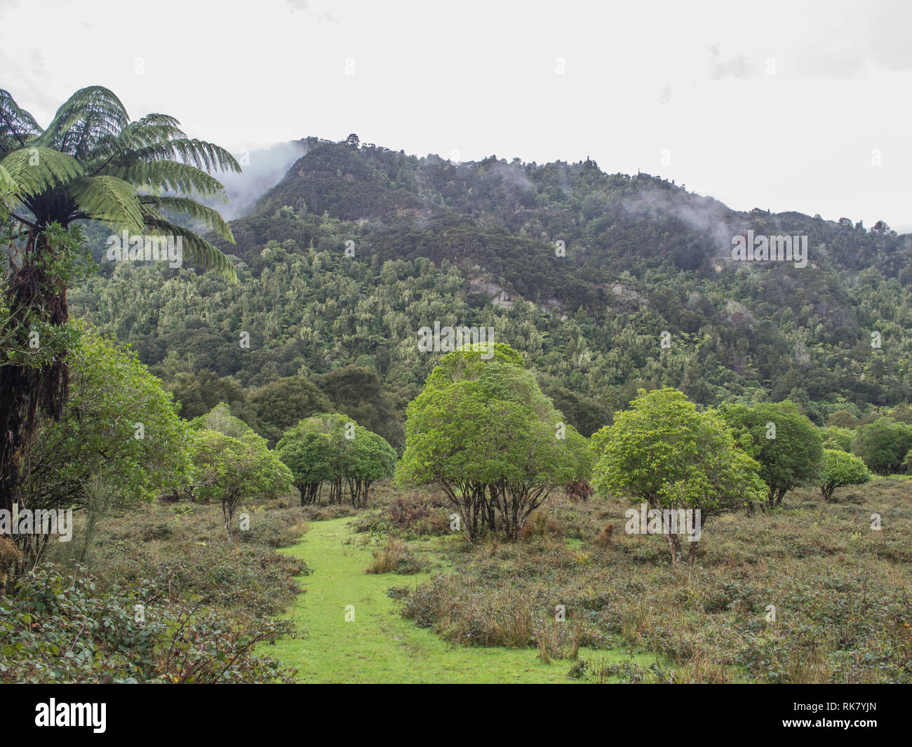 Grassy path through regenerating shrubland, mist rising after rain, native forest bush clad hills beyond,  Ahuahu Valley Whanganui River New Zealand - Stock Image