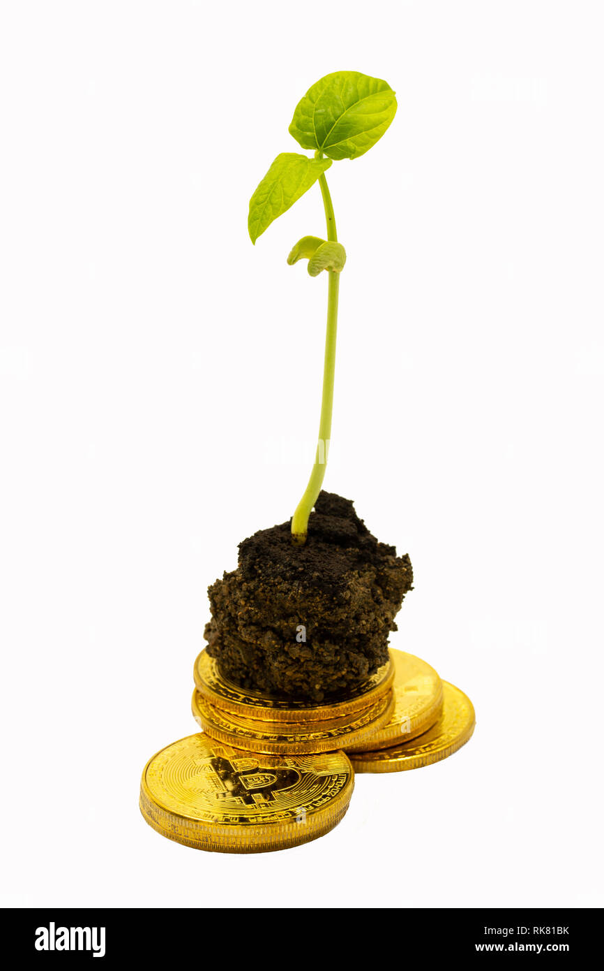 Young seedling based on a pile of Bitcoins,concept of growth with Cryptocurrencies. - Stock Image