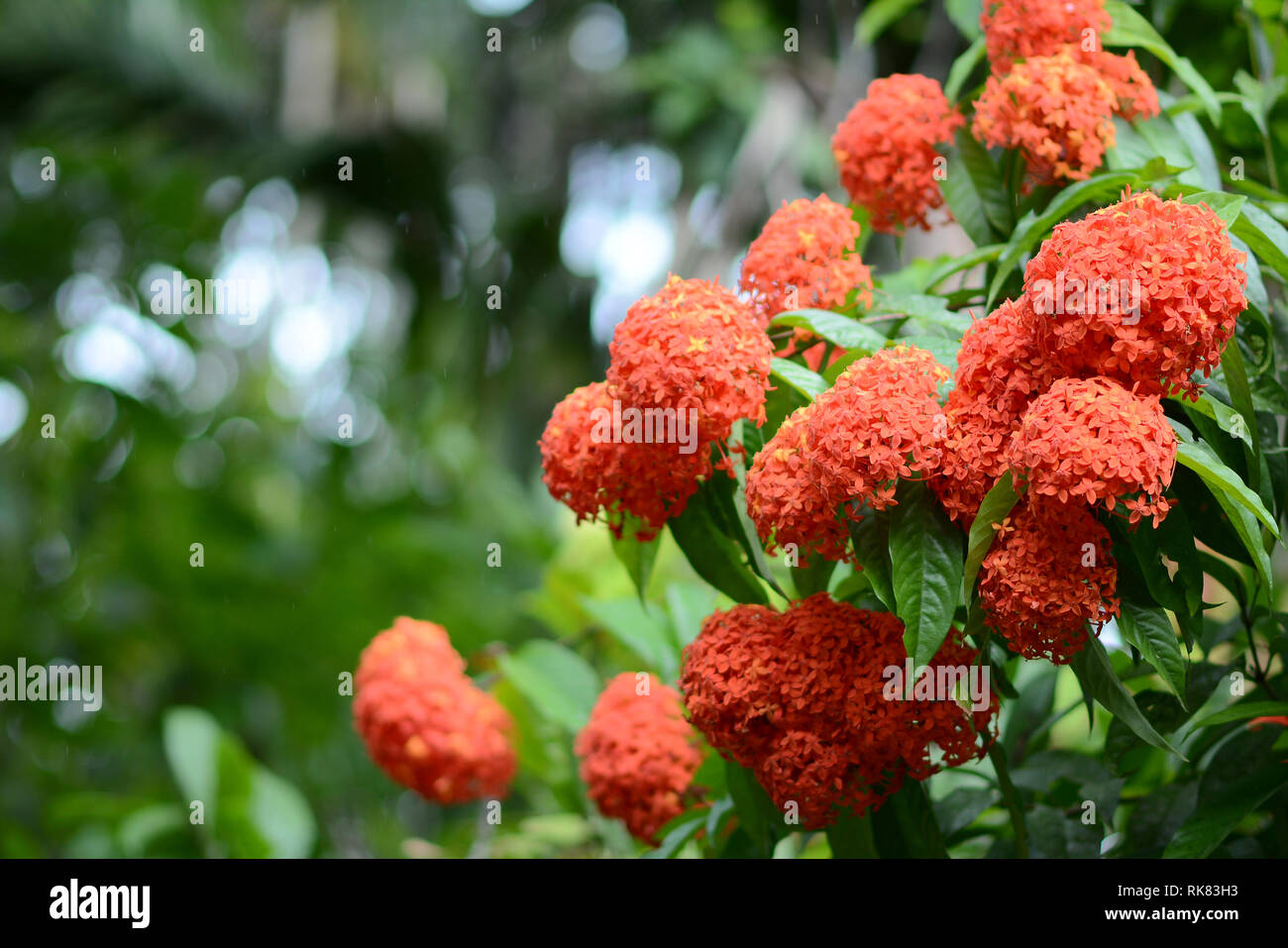 Red Flower - Stock Image