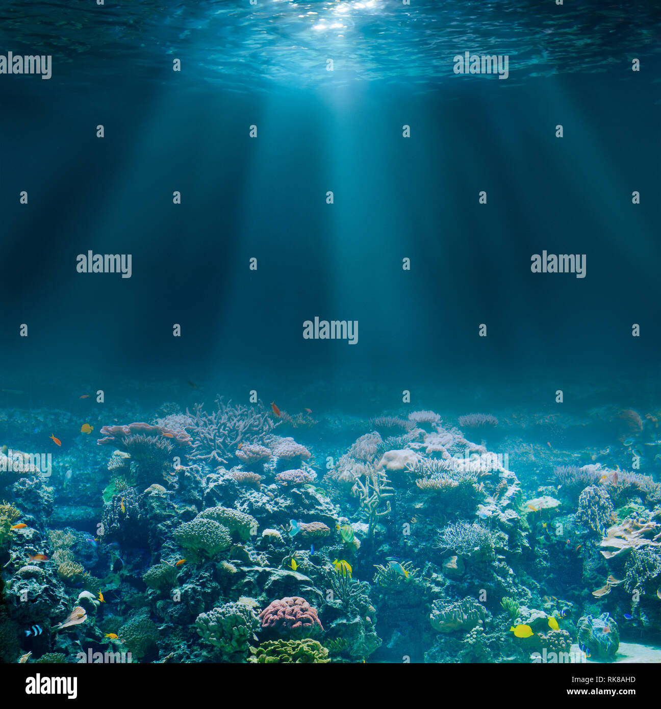 Sea or ocean seabed with coral reef. Underwater view. Stock Photo