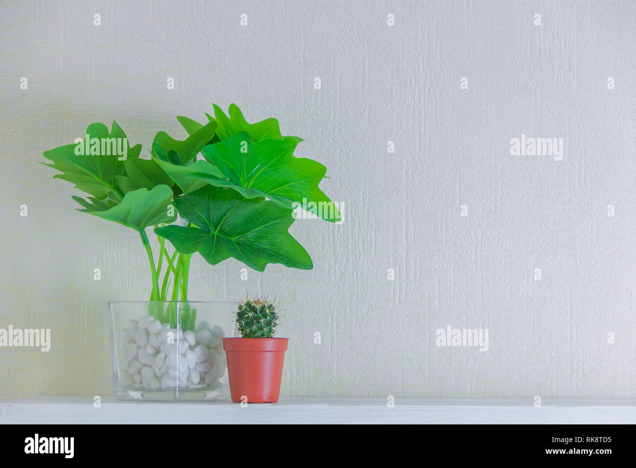 Houseplant And Cactus In Cute Pots On Wooden Shelf On White Wall