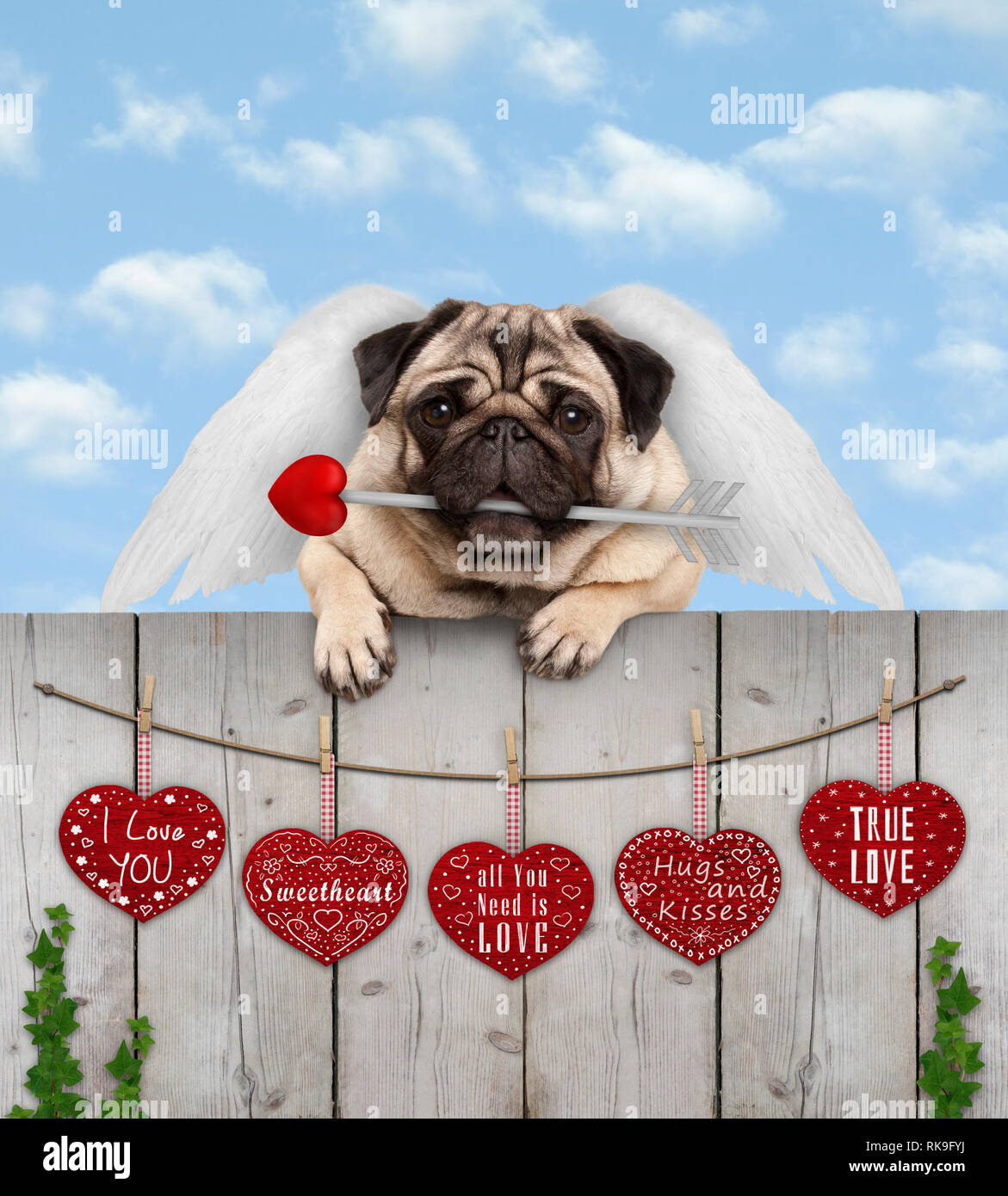 cute pug puppy dog with cupid angel wings and arrow, hanging on fence with wooden hearts with love text, blue sky - Stock Image