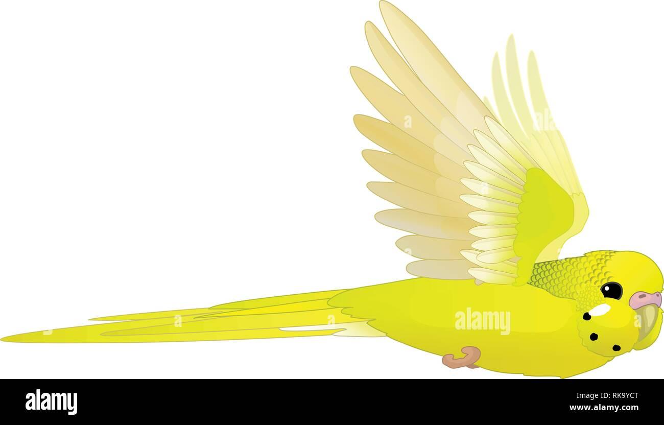vector cartoon animal clipart: flying budgerigar Stock Vector
