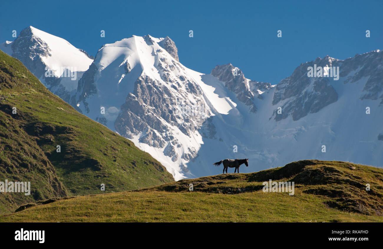 View of Georgia's highest peak, Mt Shkhara (5201 metres) , from Ushguli. - Stock Image