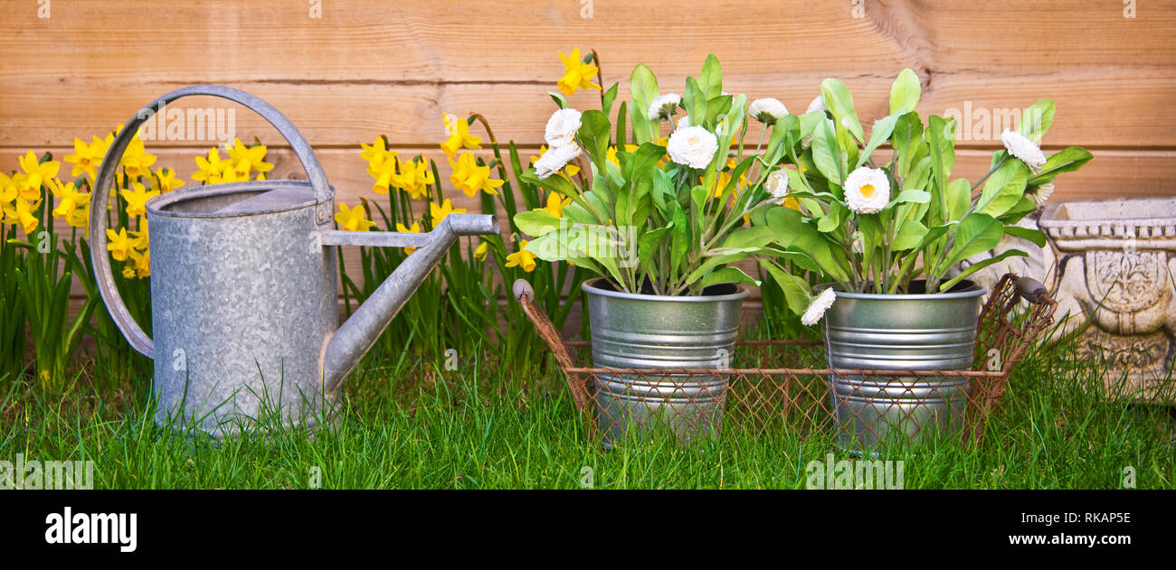 Watering can and flowers in a garden - Stock Image