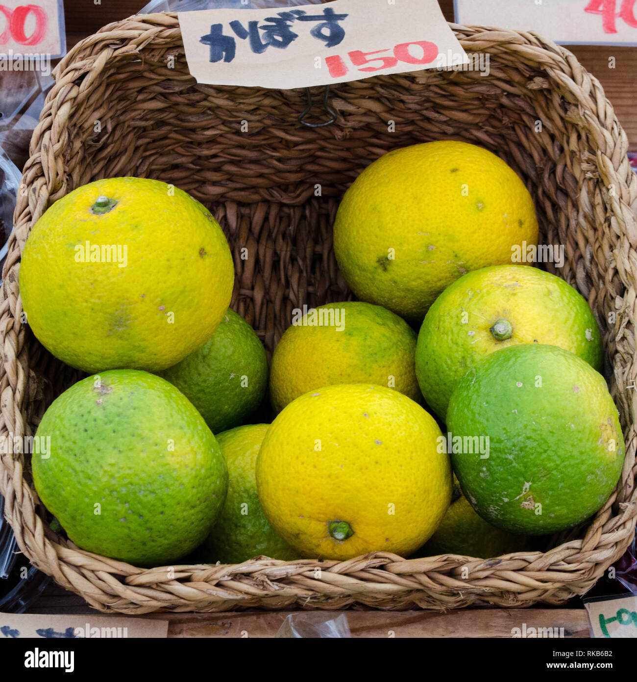 Kabosu - a sour citrus variety native to Japan and used in traditional Japanese cuisine.  The yellow fruits are ripening. - Stock Image