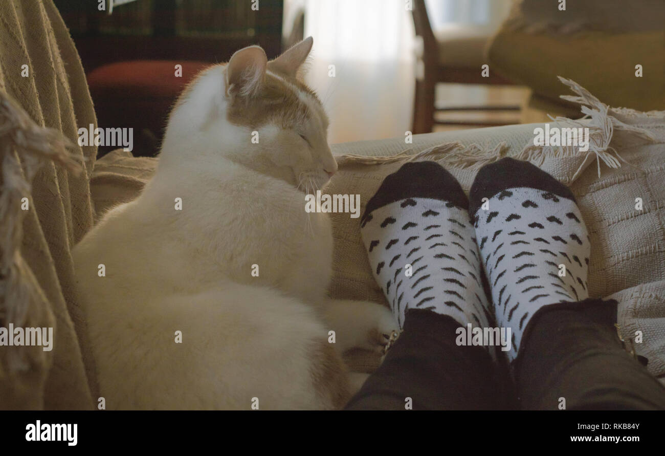 Adorable domestic cat sleeping together from human feet with hearts socks on a sofa - Stock Image