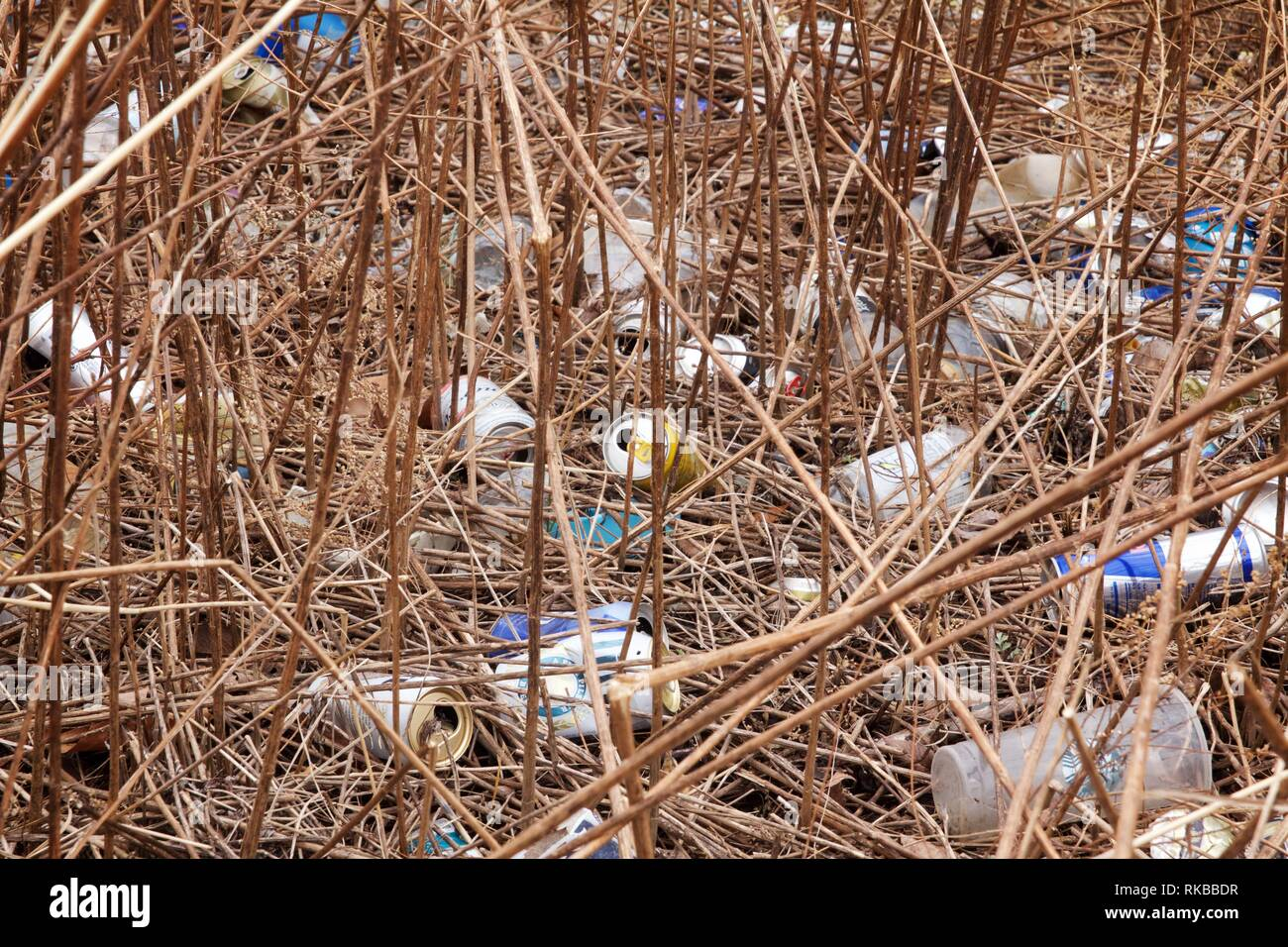 Croydon, Pennsylvania, USA - February 6, 2019: Cans and bottles litter a wetland restoration project that is part of the Delaware River watershed. - Stock Image