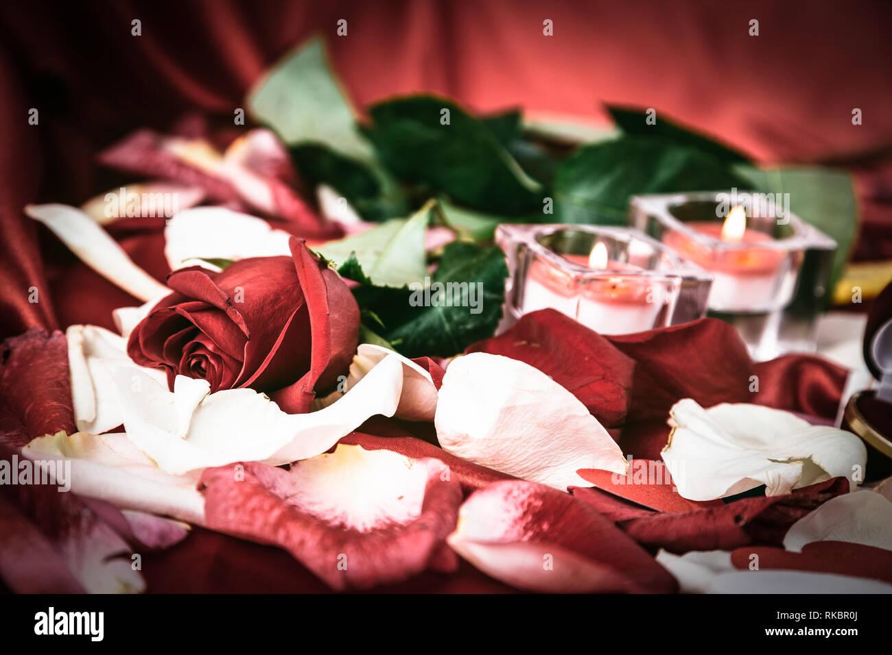 Burning Rose Stock Photos & Burning Rose Stock Images - Page