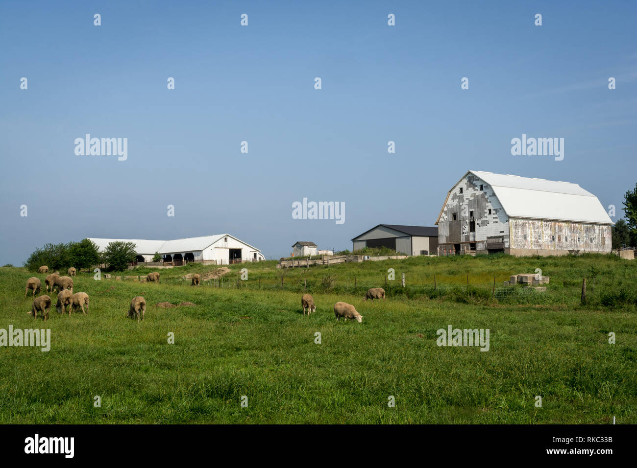 Rural midwest sheep farm. - Stock Image