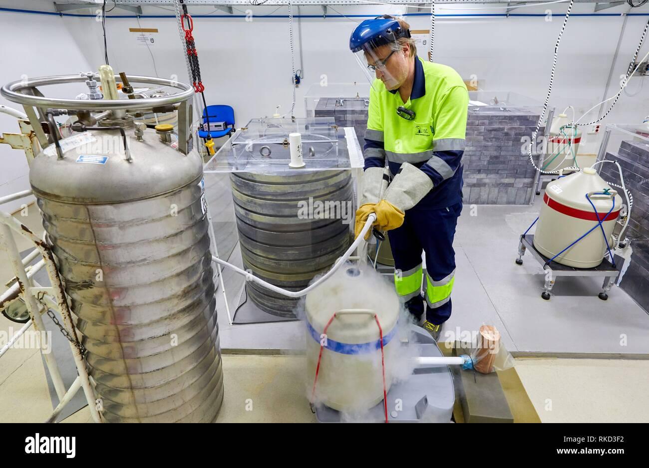 Liquid Nitrogen Refilling, Germanium Detectors, The Laboratorio Subterraneo de Canfranc (LSC) has been excavated in the rock 800 m deep under the - Stock Image