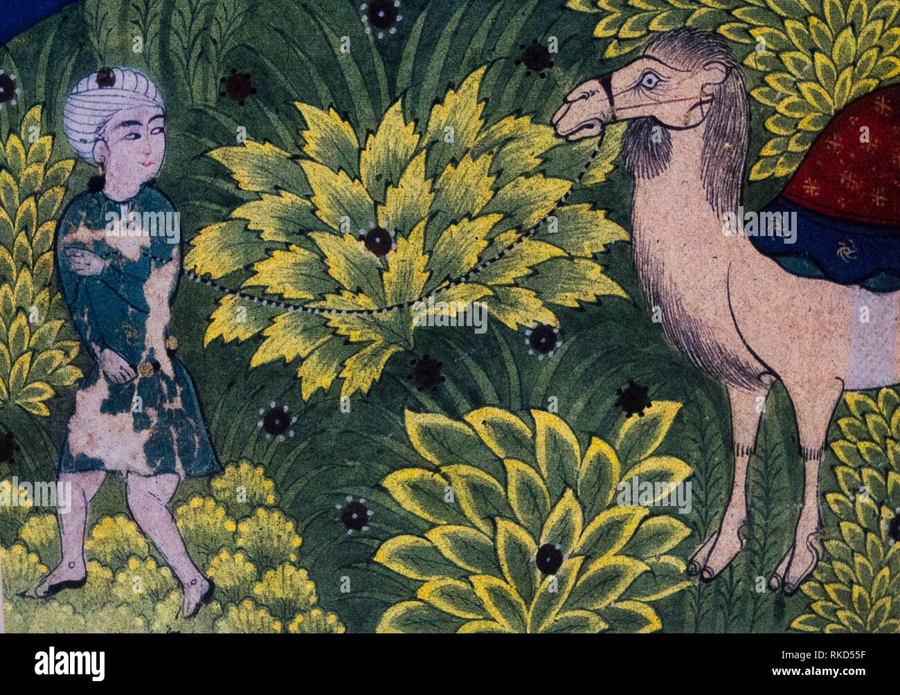 Islam. Persian miniature by Muhammad Ibn Daud Shadiyabadi, XVc. representing green area where camels, soo important for commercial exchange and wars, - Stock Image