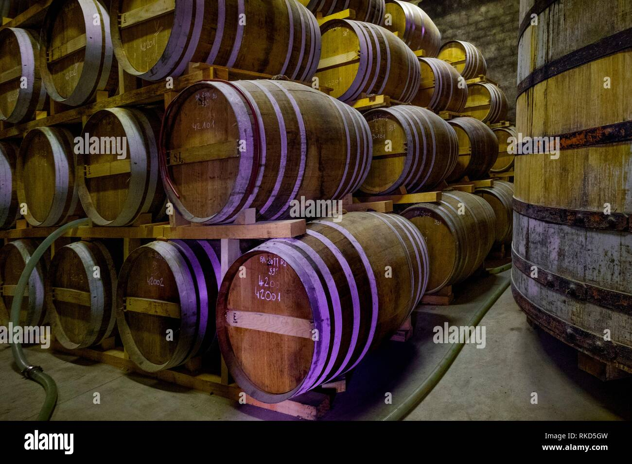 France, Occitanie, Gers, at the ''Armagnac Delord Estate'' at Lannepax. Cellar where the Armagnacs are ageing. - Stock Image