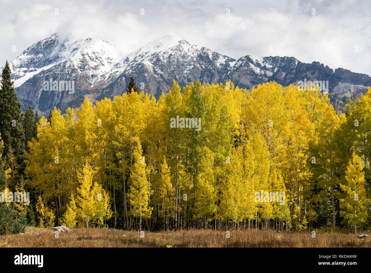 East and West Beckwith Mountains viewed from Kebler Pass Road. Located in Gunnison National Forest, Colorado. Stock Photo