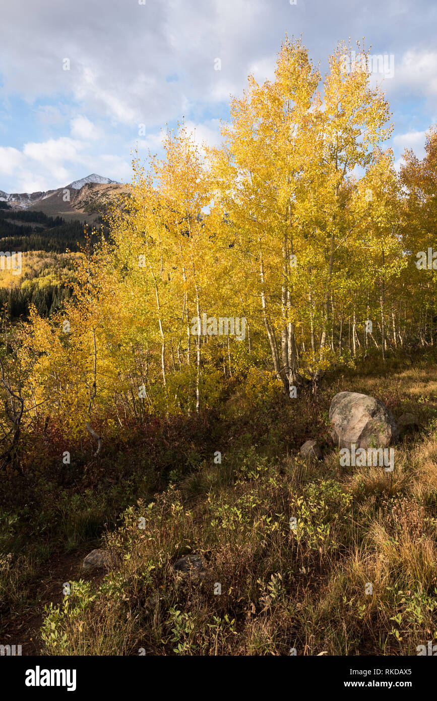 View of East Beckwith Mountain and Lost Lake Slough from Lost Lake Campground in Gunnison National Forest. Stock Photo