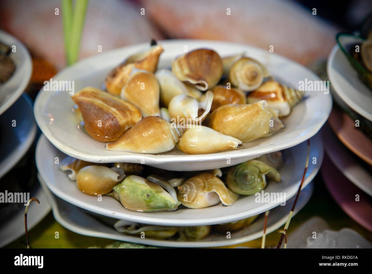 Edible Species Sea Snail Stock Photos & Edible Species Sea Snail