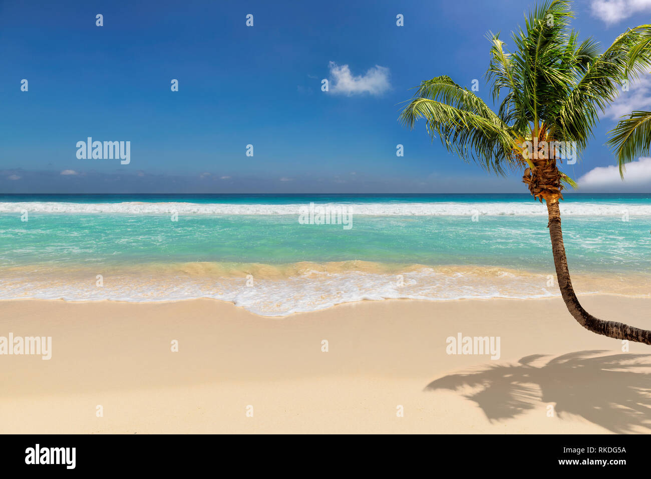 Paradise beach with coco palm over white sand and turquoise sea on exotic island. Stock Photo