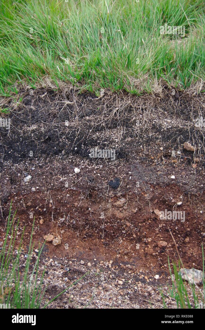 Cross Section Soil Profile of Dartmoor Soil and grass Roots by Wistmans Wood, Dartmoor National Park, Two Bridges. Devon, UK. - Stock Image