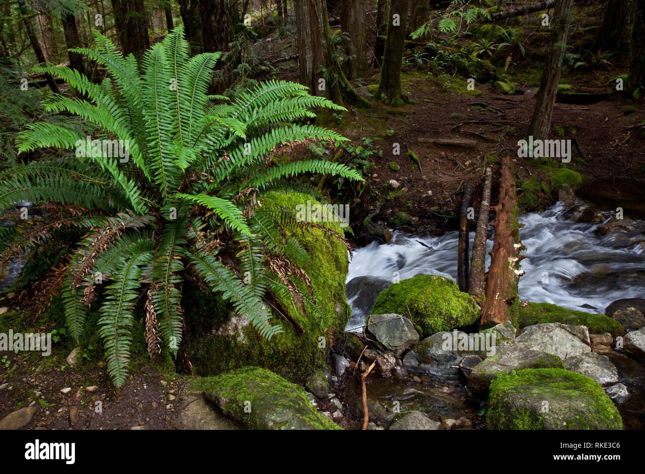Tenedos Bay, Desolation Sound, British Columbia, Canada - Stock Image