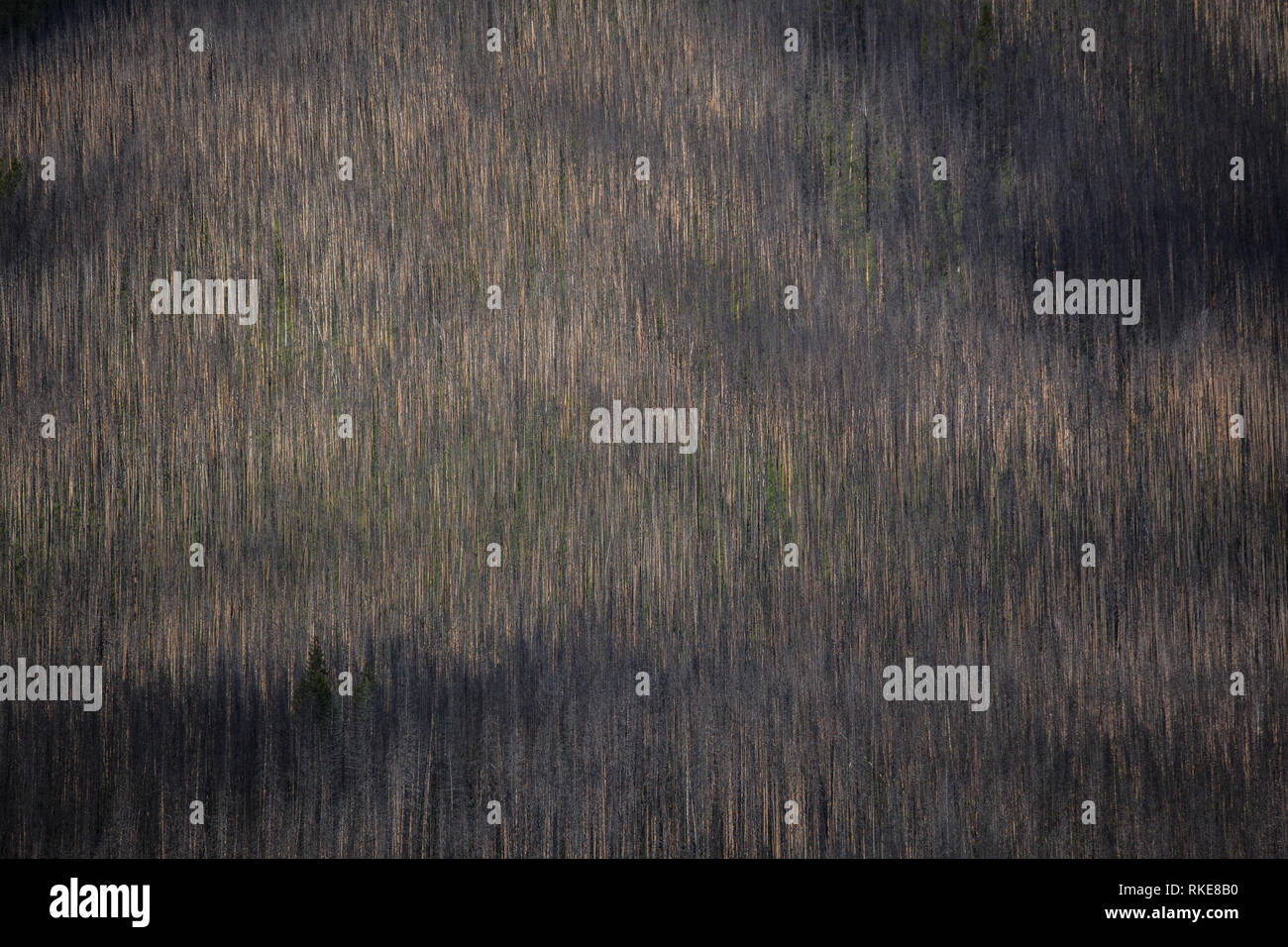 Yoho National Park, Rockies, British Columbia, Canada - Stock Image