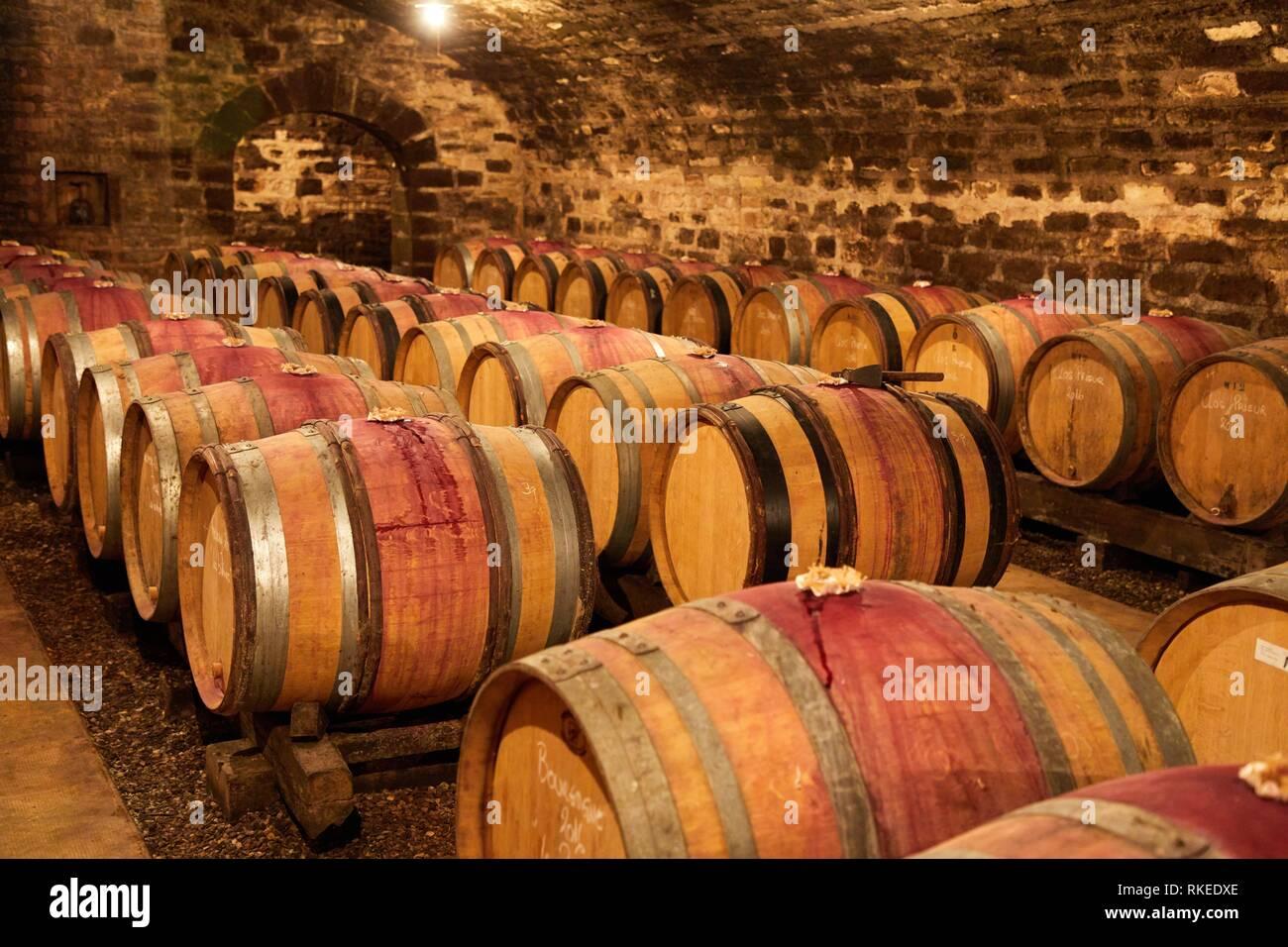 Wine cellar, Domaine François et René Leclerc, Gevrey-Chambertin, Côte de Nuits, Côte d´Or, Burgundy Region, Bourgogne, France, Europe Stock Photo
